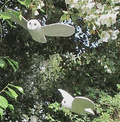 Flying Owls
