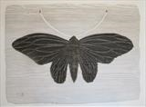 Black Moth by Jilly Sutton ARBS, Sculpture, Wood and Pigment