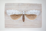 Spindle Moth by Jilly Sutton ARBS, Painting, Acrylic paint on wood
